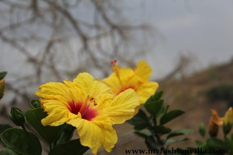 hotel wild retreat kumbhalgarh - Our Stay
